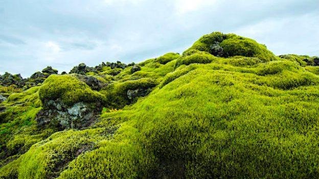 Ecologie: Antarctica devine verde şi de nerecunoscut!