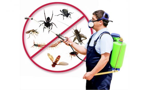 EuroPest Control – deratizare ploșnite, gândaci, șoareci, șobolani