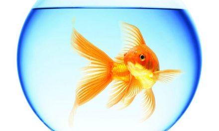 Lecție de engleză – Goldfish, brains and phones