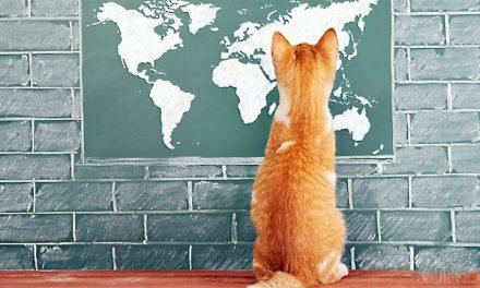 Lecție de engleză – How do pets navigate? (BBC video)